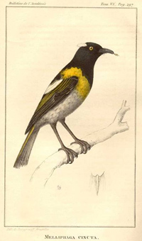 Hihi Illustration
